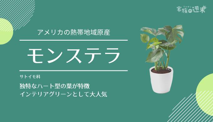 観葉植物おすすめのモンステラ