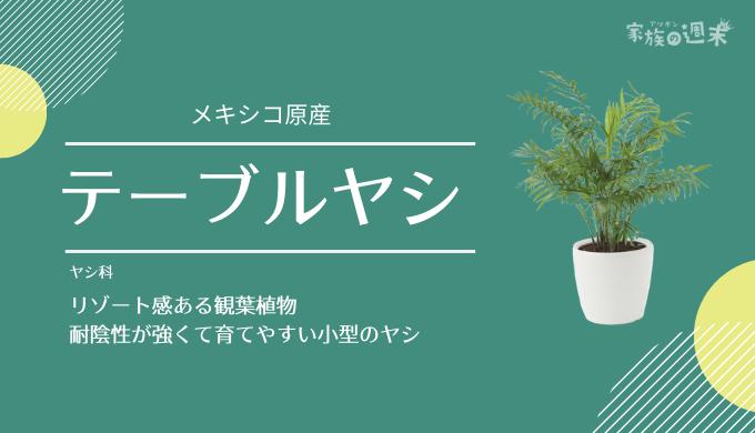 観葉植物おすすめのテーブルヤシ