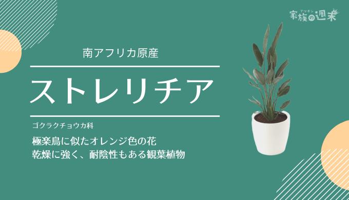 観葉植物おすすめのストレリチア