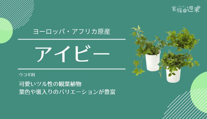 観葉植物おすすめのアイビー