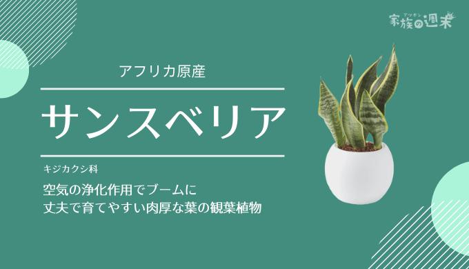観葉植物おすすめのサンスベリア
