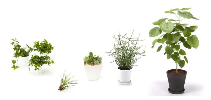 室内で育てる観葉植物の選び方