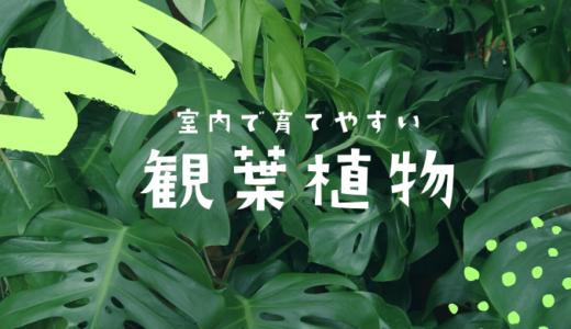 【ズボラでOK】室内で育てやすいおすすめ観葉植物5選!種類や育て方も解説
