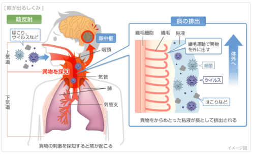 咳の原因とメカニズム